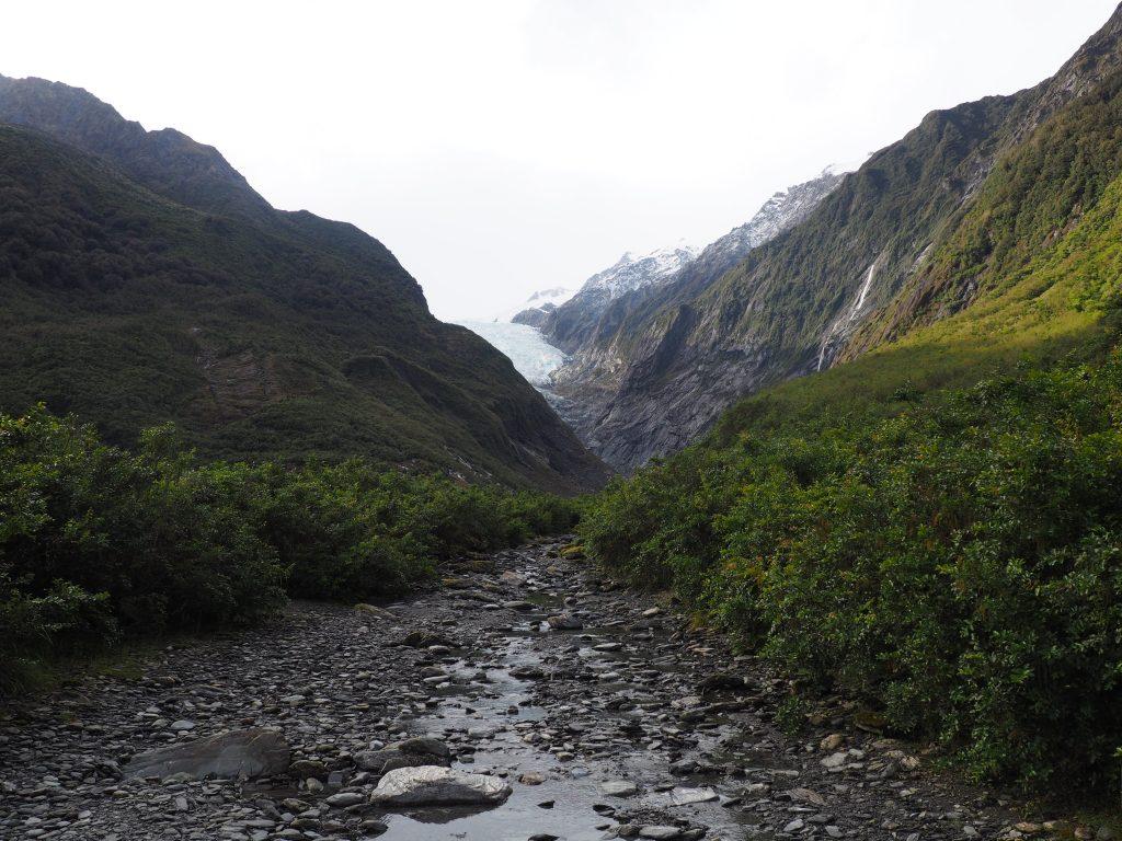 Franz-Josef-Gletscher und einige Pflanzen.