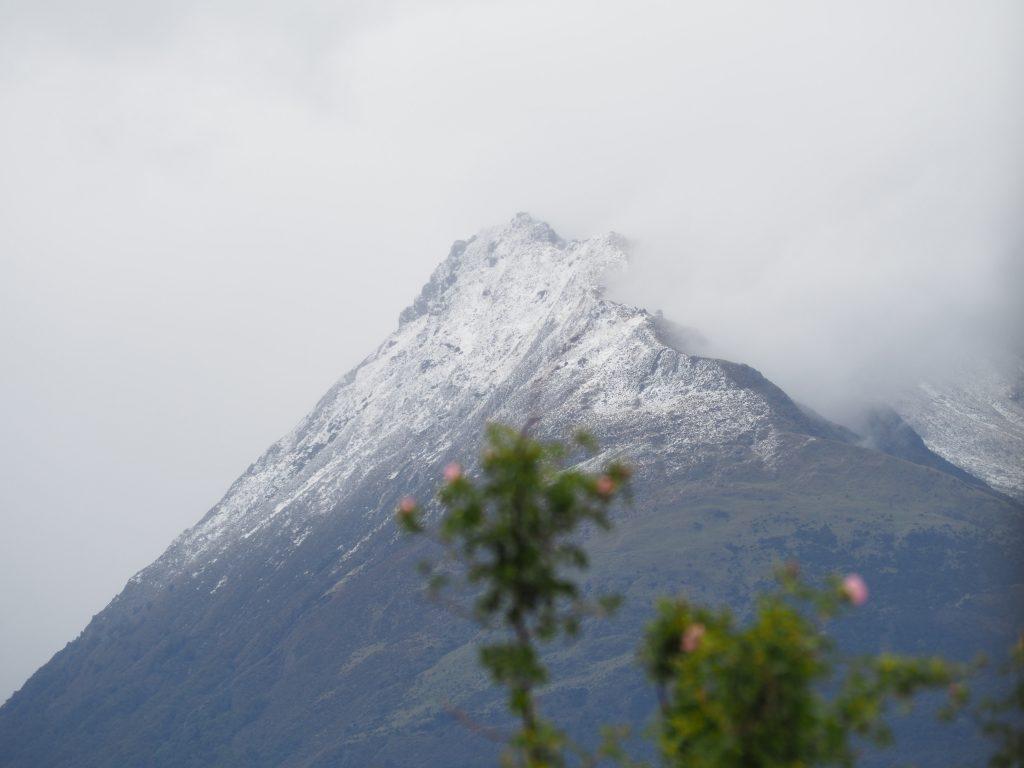 Schneebedeckte Bergkuppe mit Blumen im Vordergrund.
