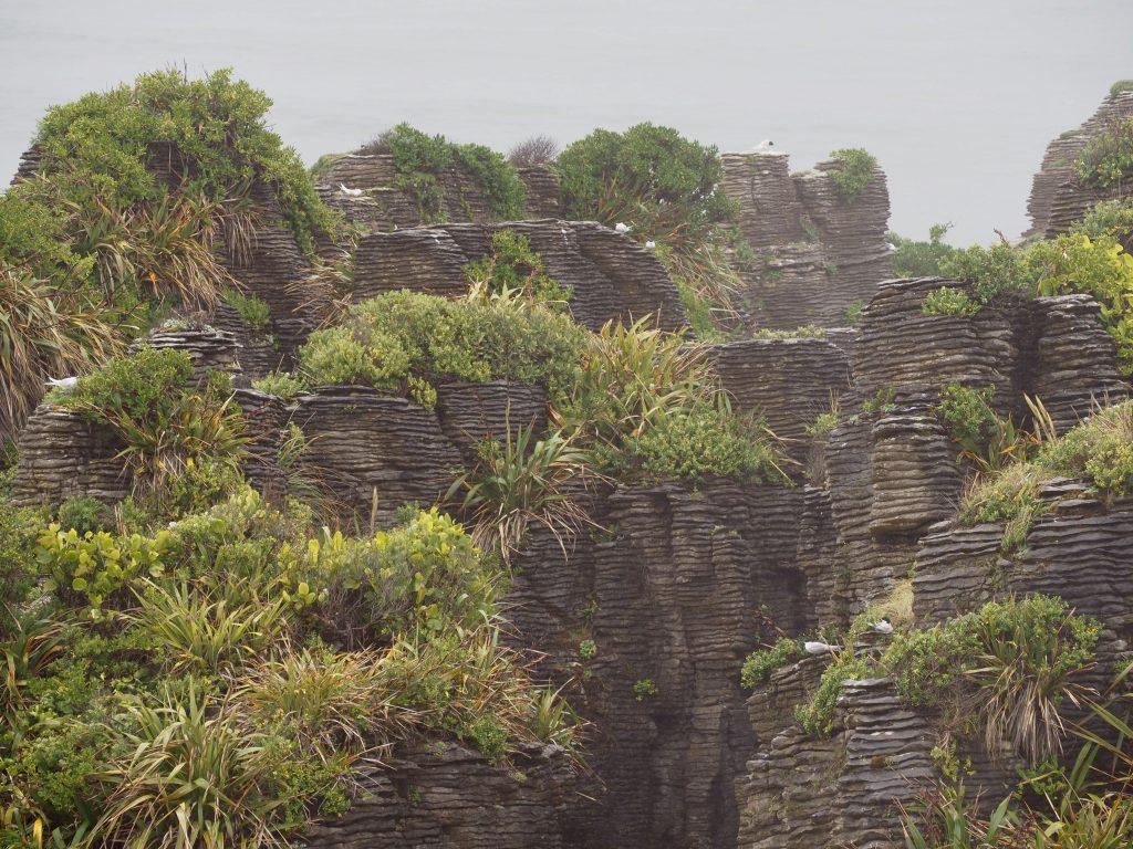 Grün bewachsene Pancake Rocks.